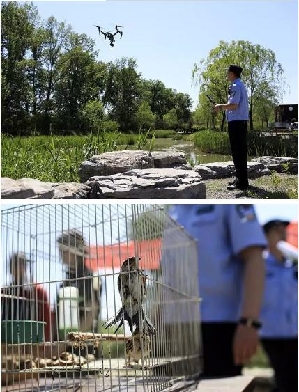 保护候鸟|金豪棋牌网站移动警务室——北京首个湿地移动森林警务执法站